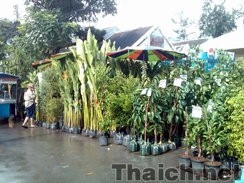 チャトチャック植物市場