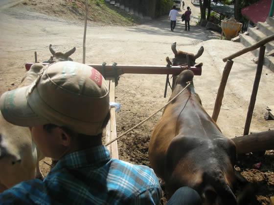 なぜか牛車で練り歩く…エレファントキャンプツアーに申し込んでみた!-その2