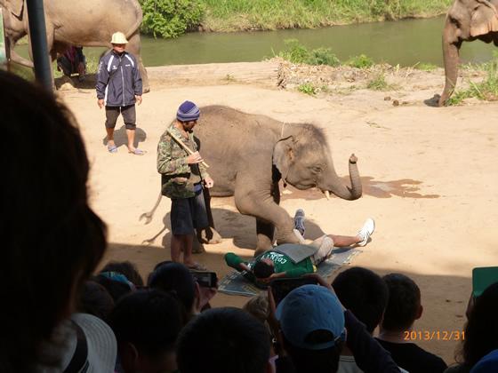 象芸に「象格」を見た! チェンマイでエレファントキャンプツアーに申し込んでみた!その5