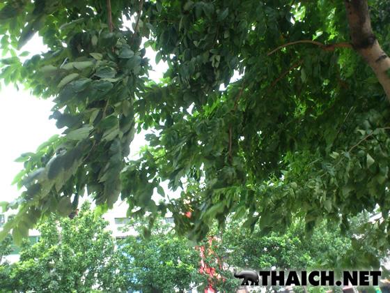 タイのコンビニには傘がない?