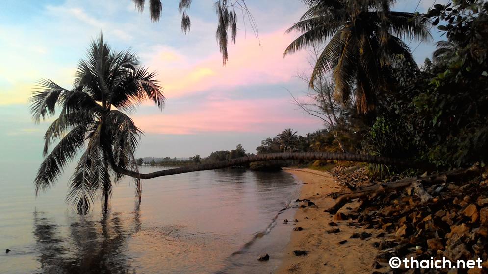 海面と平行に伸びるパンガン島の椰子の木