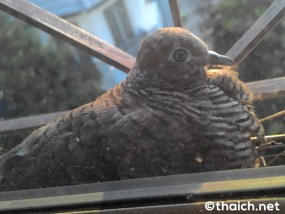 新年初卵!部屋の窓に鳥が産卵