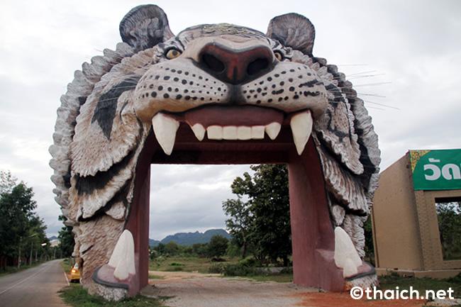 タイガーテンプルのトラ全頭をタイ自然保護当局が保護へ、トラの違法取り引き疑惑で
