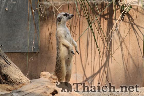 バンコク観光ガイド >>