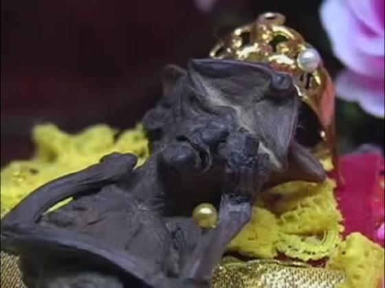 妖精のミイラがタイのシンブリ県に実在した!【TVウォッチング】