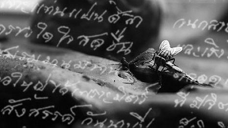チュラヤーンノン・シリポン監督作品『VHS~失われゆく水平線』 りべるたん映画祭で上映