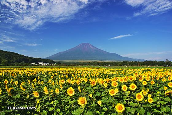 2014年上半期に日本を訪れたタイ人観光客は33万600人で前年比63.8%増