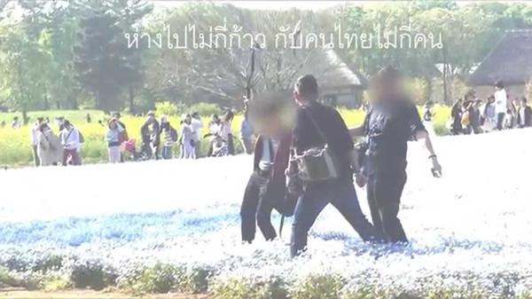 タイ人観光客が国営ひたち海浜公園で花畑を踏みつぶす動画にタイ人怒る