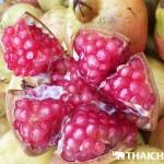 pomegranate11111111111111