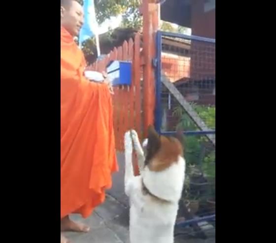 お坊さんにワイ(合掌)するタイの犬が可愛すぎる