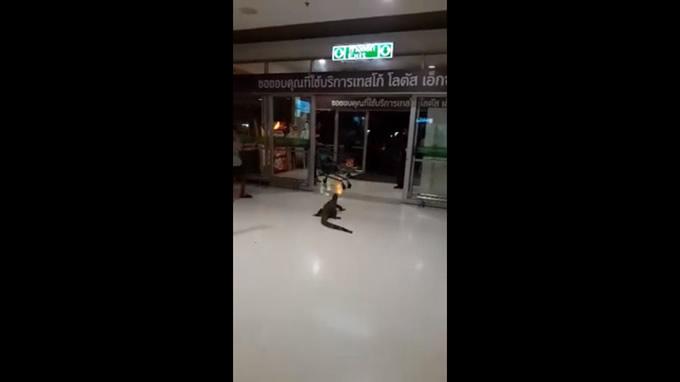 タイ中部のショッピングセンター内に巨大トカゲが出現