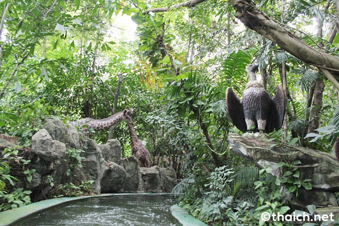 safari wolrd (32)