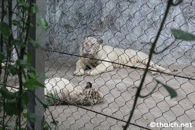 safari wolrd (34)