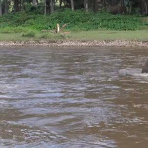 elephant news 201610