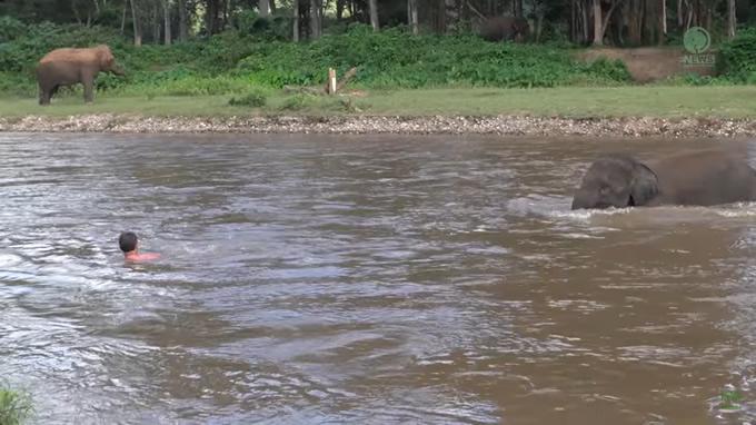 勘違いの子象が象使いを救出する感動映像