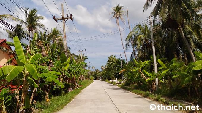 ヤシの木に覆われたパンガン島をひたすらバイクで走る。