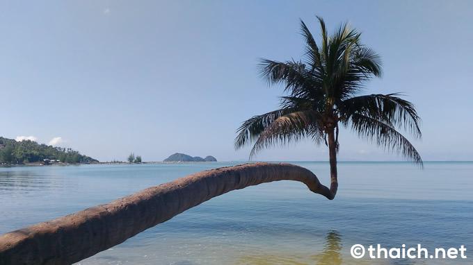 海の上に伸びるヤシの木