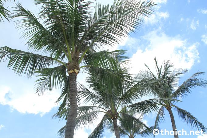 サムイ島・旅行者で賑わうチャウエンビーチの物売り達