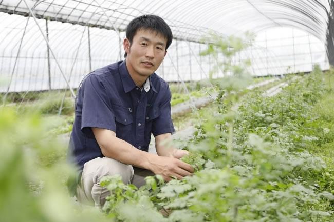 パクチー焼酎「パクチーすぴりっと」が田苑酒造から発売