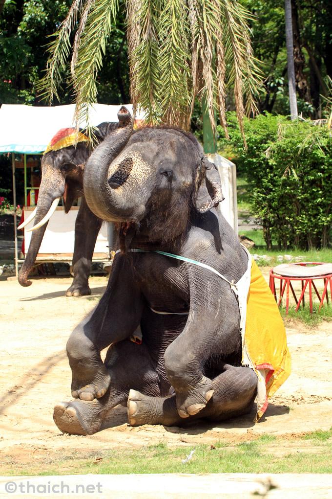 サムットプラカーン・クロコダイルファームの象さん