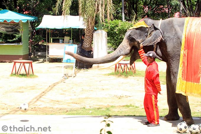 サムットプラカーン・クロコダイルファームの象さん ボーリング
