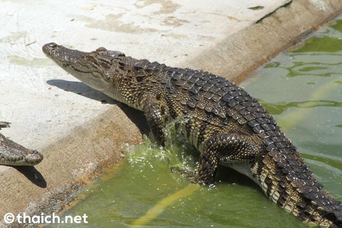 丸山桂里奈、タイで巨大危険爬虫類と対決!3月21日放送『おたすけJAPAN』