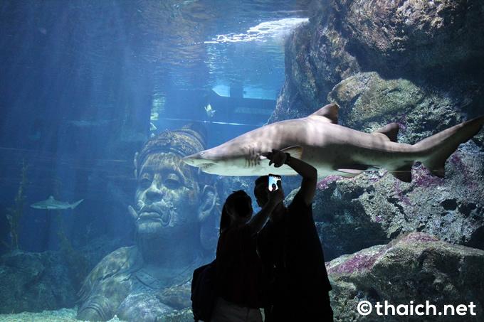 シー・ライフ・バンコク・オーシャン・ワールド(サイアムパラゴン内)~バンコクにいながら世界の海洋生物を見れる