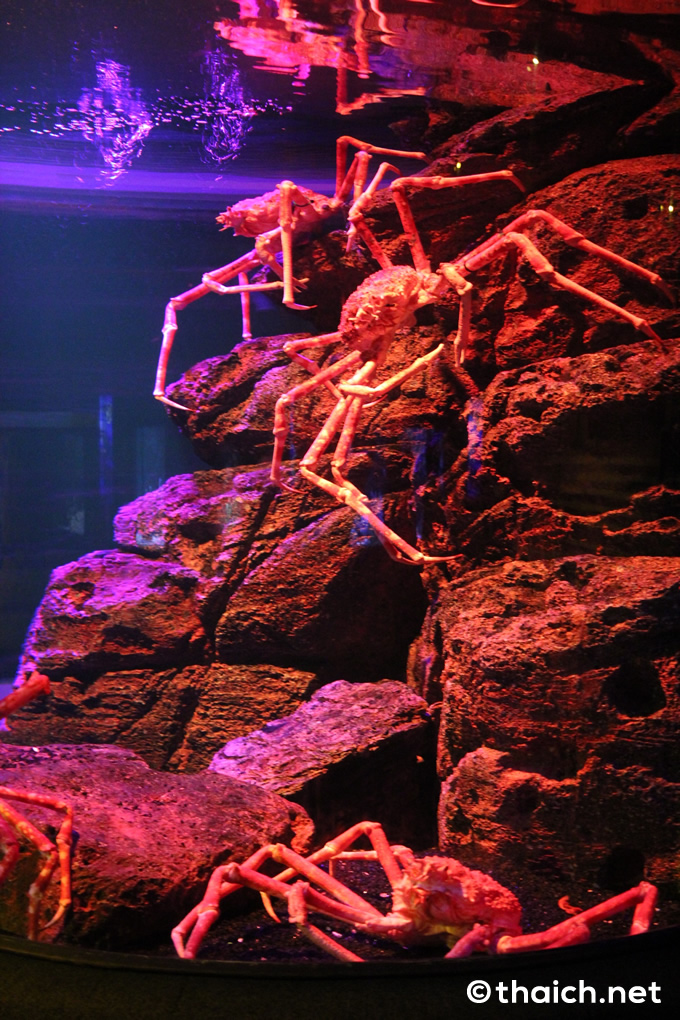 シー・ライフ・バンコク・オーシャン・ワールド(サイアムパラゴン内)の蟹