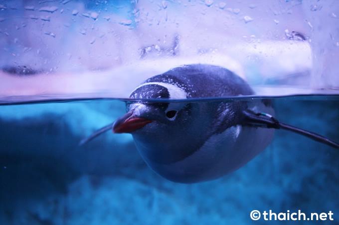 ペンギン・アイス・アドベンチャー