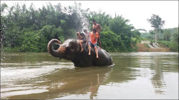 「スリンの象祭り」には行けないけど、お手軽に象さんと触れ合いたいっ!