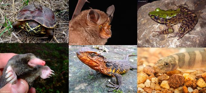 メコン川流域でカタツムリを食べるカメなど115種の新種発見