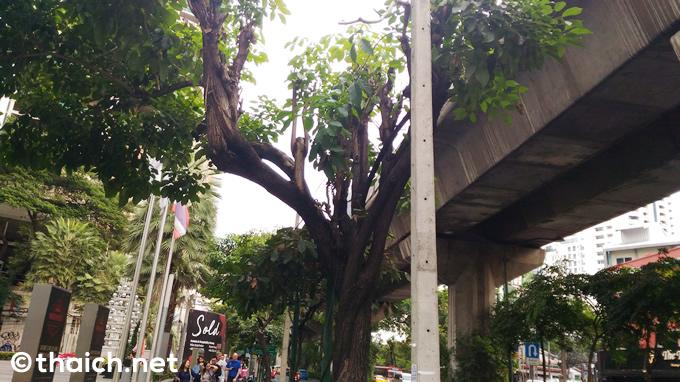 電柱が地中化し電線が見えなくなったバンコク・スクンビット通り