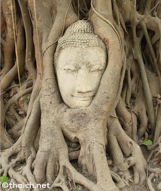 アユタヤにあるワット・マハタート(วัดมหาธาตุ)の木の根で覆われた仏頭