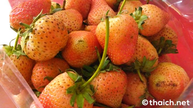 チェンマイ産イチゴのトラック販売、価格は1キロ70バーツ(約230円)