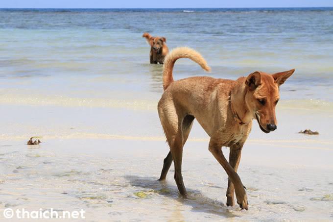 狂犬病に注意!タイ13県を危険エリアに指定