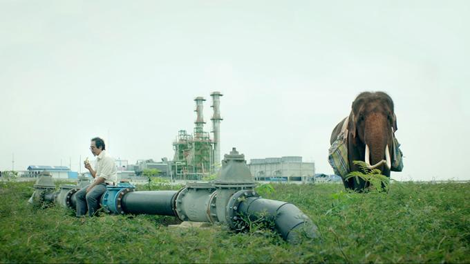 タイ映画「ポップ・アイ」が日本で劇場公開!ゾウと中年男とのタイ縦断500キロの旅
