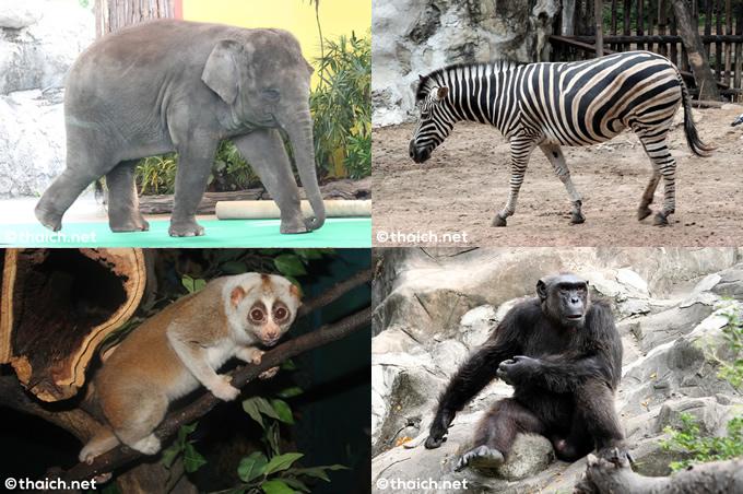 タイ最古の動物園「ドゥシット動物園」が80年の歴史に幕