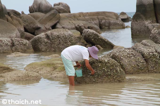 タオ島で最も賑わうサイリービーチ
