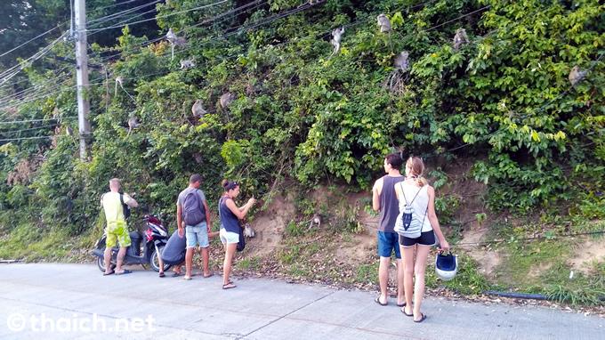 パンガン島で猿の大群に出会った
