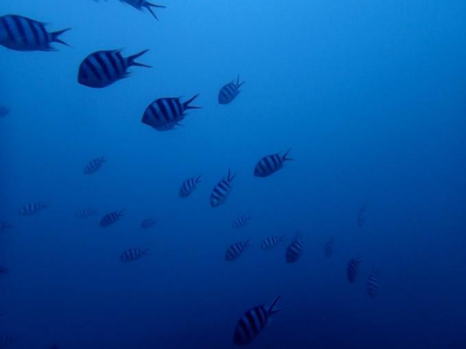 タイ・シミラン諸島での宿泊を禁止に、環境汚染対策で