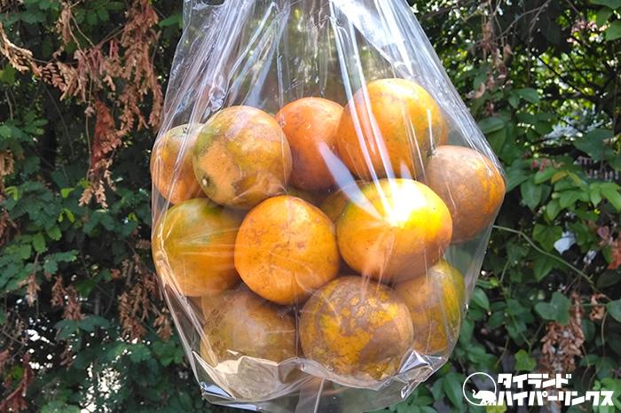 「将軍オレンジ」のトラック販売で1キロ60バーツ(約200円)