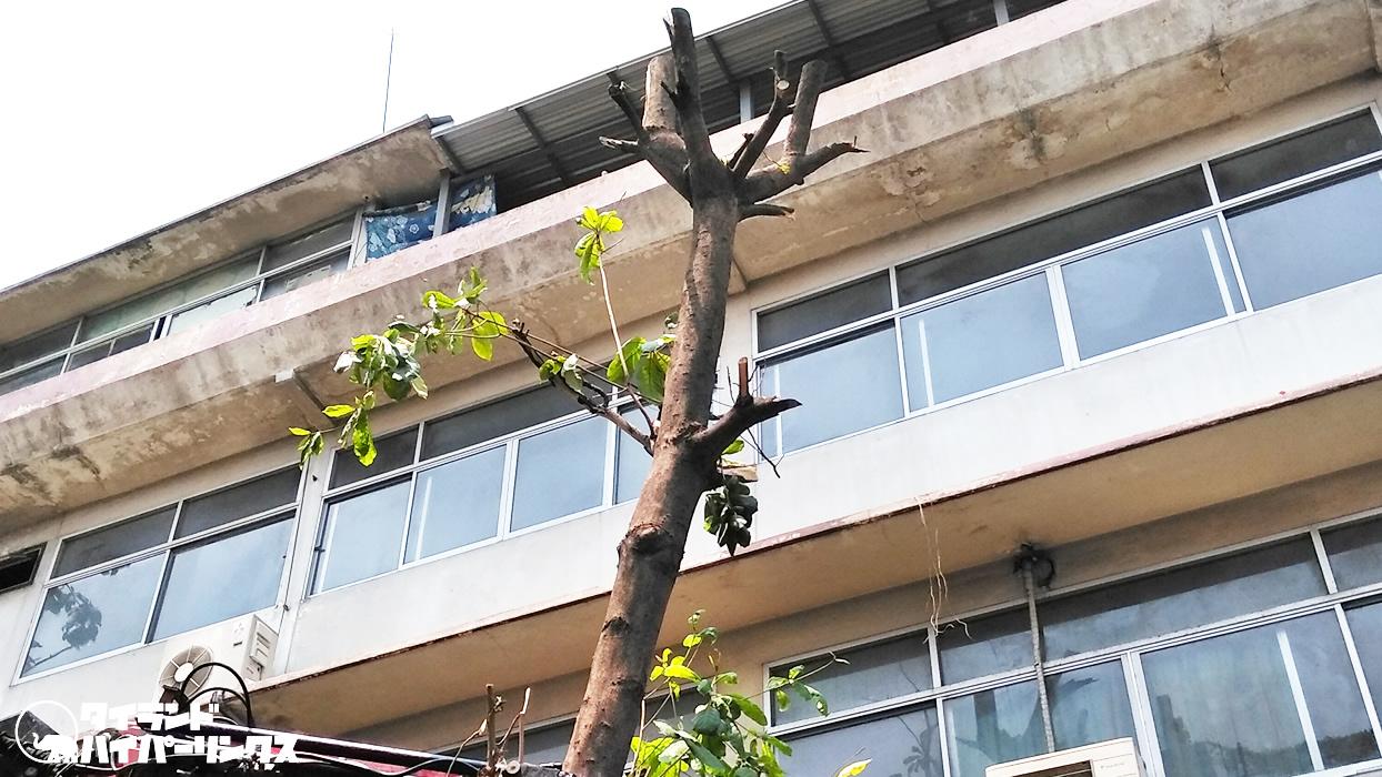 放っておけばジャングルのように!街路樹の枝をバッサリ切る