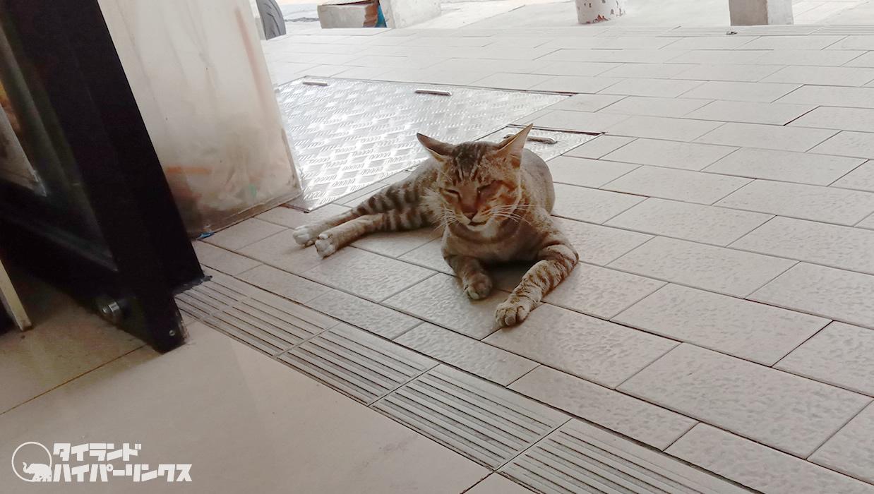コンビニの 入り口前で 涼む猫~バンコクの街角の風景