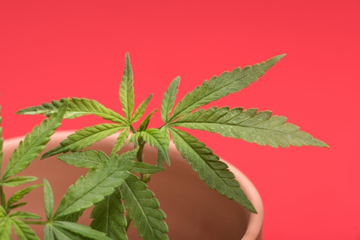 大麻をFacebookで販売、おとり捜査で20歳~21歳のタイ人男女3人を逮捕