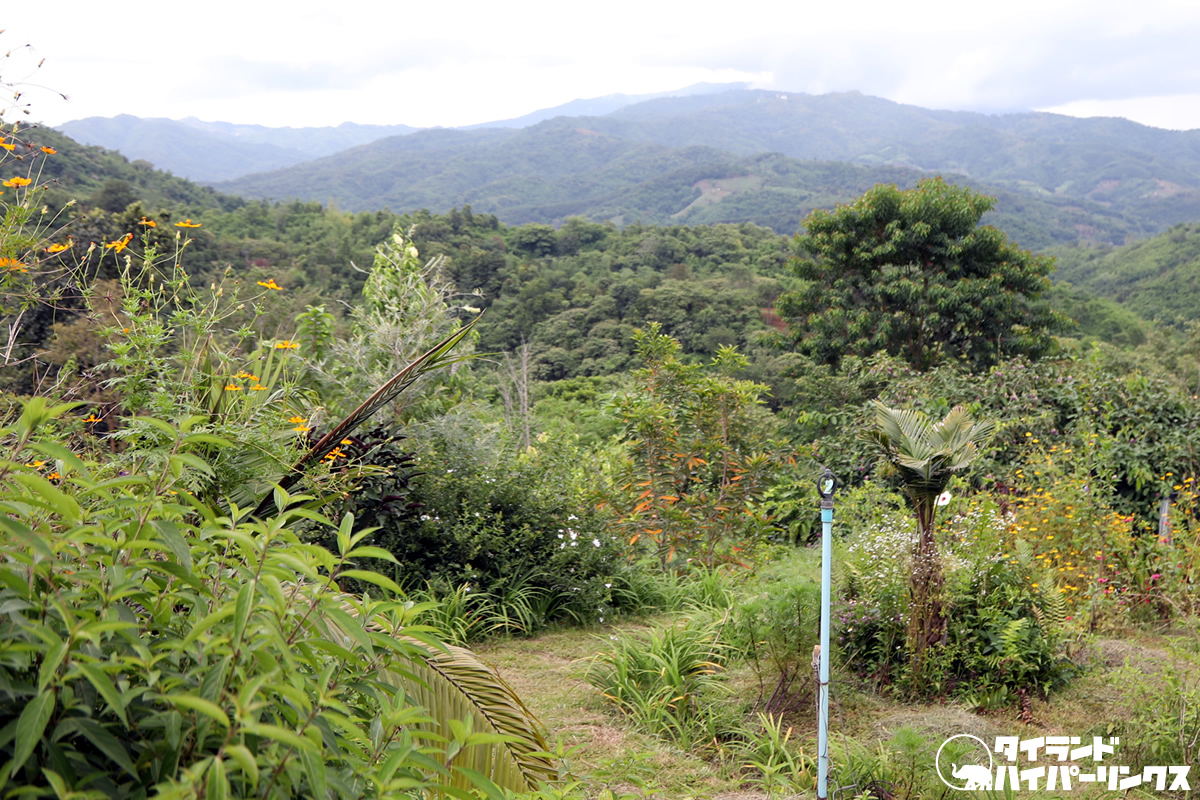 タイ最北の地チェンライの山間リゾート「プーチャイサイ」のオーガニックファーム