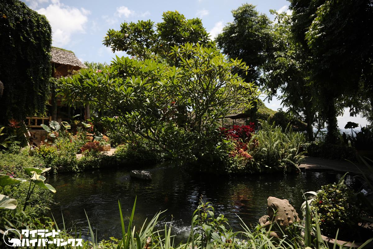どこにも出かけず、池のある庭を散歩・・・