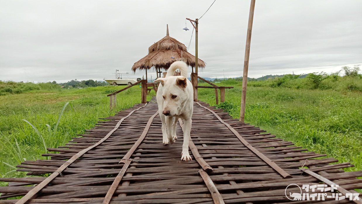 「世界ウルルン滞在記」 でタイを訪れたのは誰?どこに滞在?