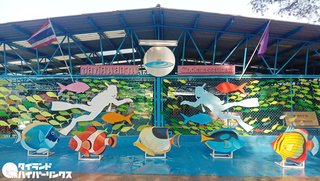 シーチャン島の海洋博物館でサメとカメに出会う