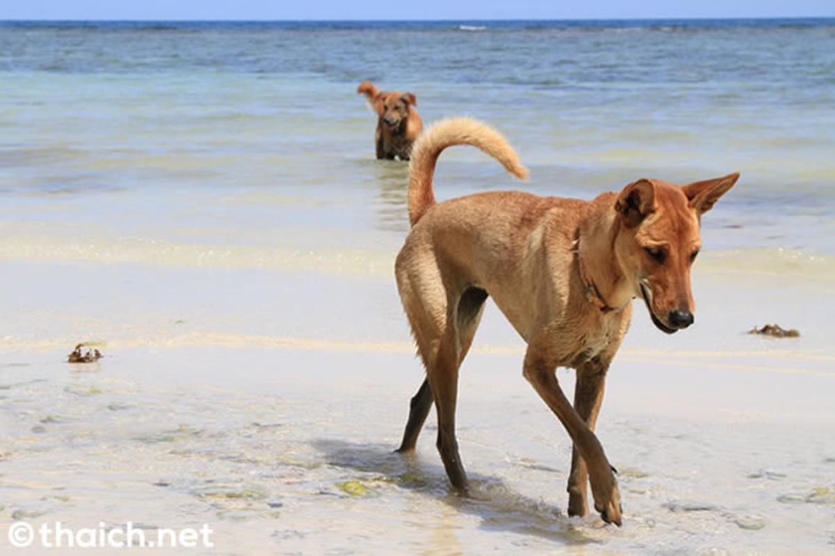ビーチ犬のイメージ写真