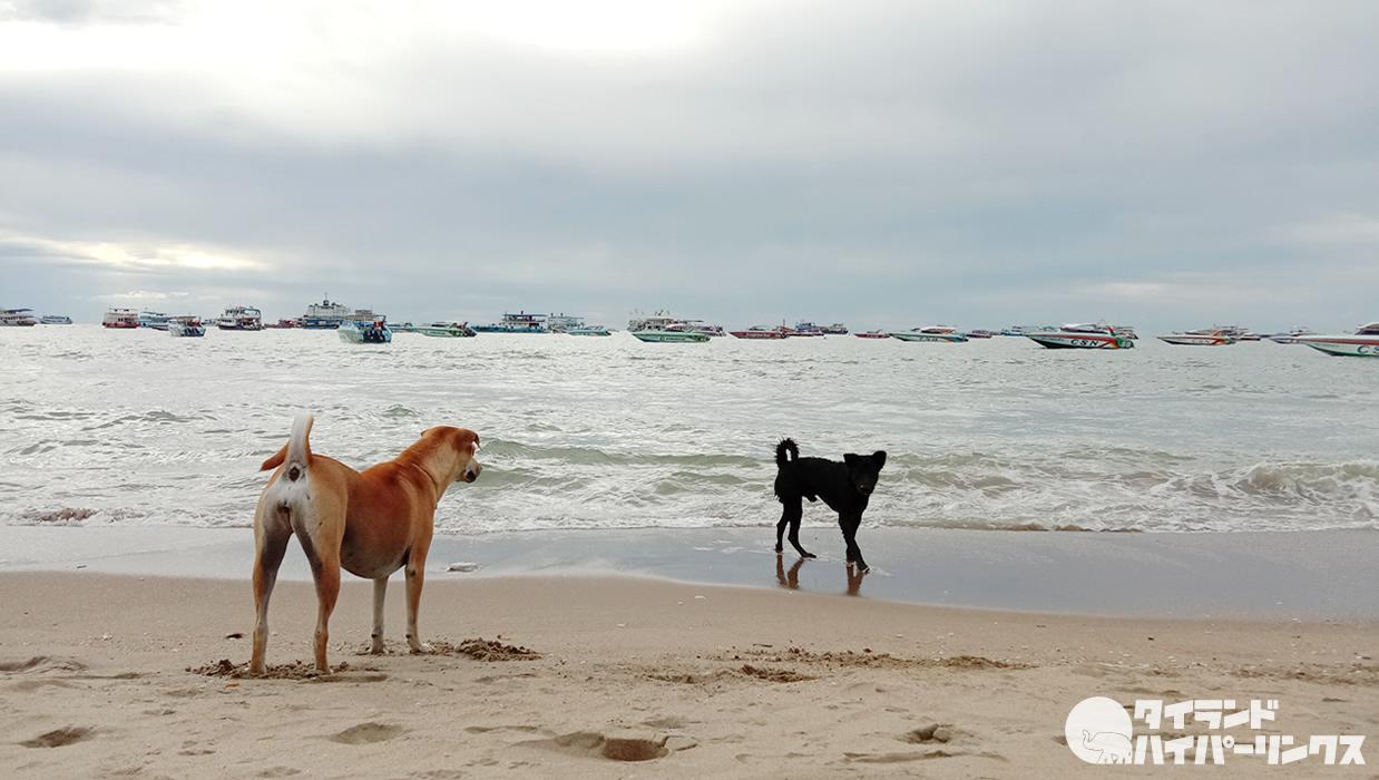 またもタイ南部クラビのビーチで子どもが犬に襲われる